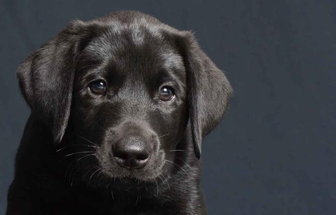Naughty Dogge Dog Training Victoria BC Puppy Training