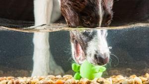 Socializing, Puppy, Dog Training, Dog Parks,