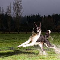 Dog Training in Victoria, BC, Obedience, Monique Anstee, Naughty Dog, trainers