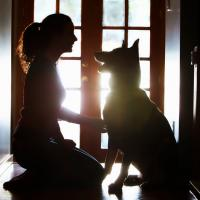 Attention Training Your Dog